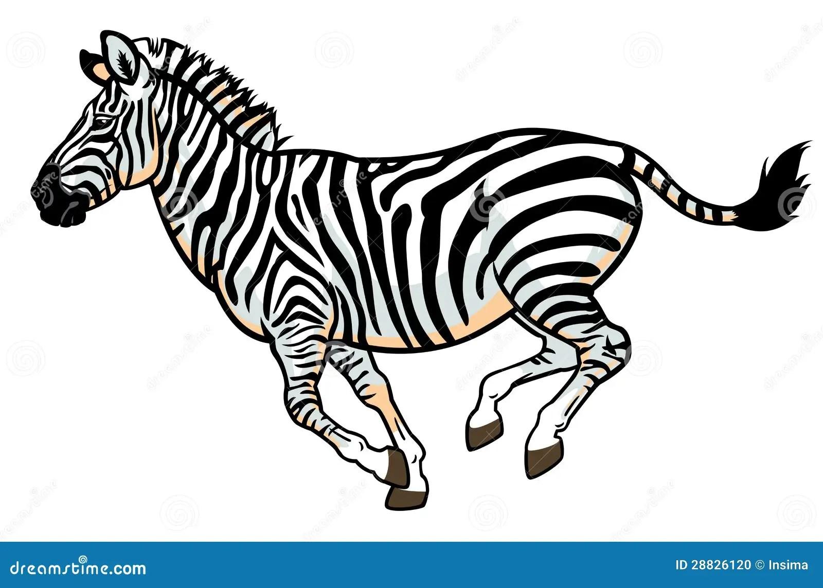 Zebra On White Stock Vector Illustration Of Illustration