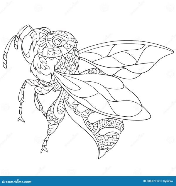 Bee Handdrawing Insect Sketch Cartoon Vector