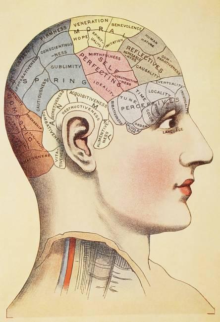 https://i1.wp.com/thumbs.imagekind.com/4196891_650/A-phrenological-map-of-the-human-brain.jpg