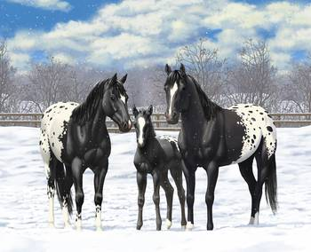 Black Appaloosa Horses In Snow By Crista Forest