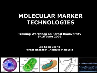 the gcp molecular marker toolkit an instrument for use in - HD1024×768