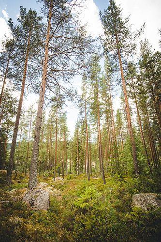 Bomen staan hoog en trots in de Zweedse natuur