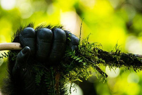Hand van Berggorilla