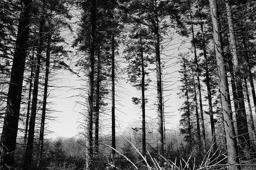 Bomen in de natuur