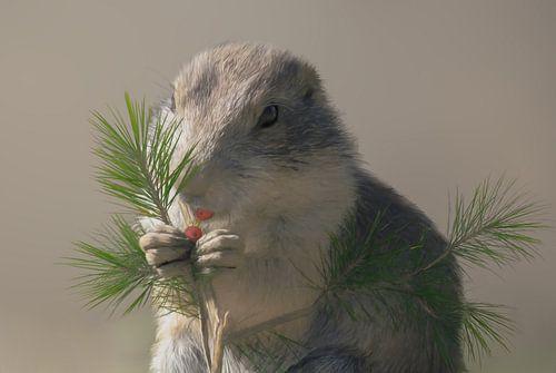 Baby eekhoorn die een besje eet