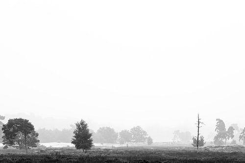 Natuur in zwart-wit