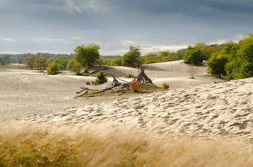 Nederlandse Sahara
