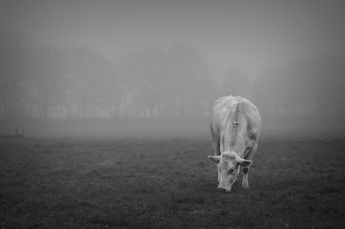 blondje in de mist