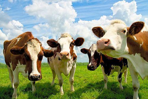 Vier kletsende koeien