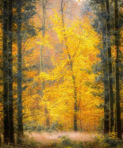 Herfst in de bossen bij Gasselte, Nederland