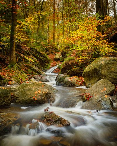 Herfst in de Belgische Ardennen