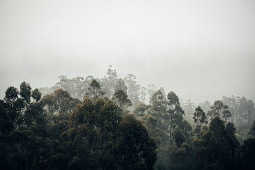 In de wolken bij Liptons Seat in Haputale, Sri Lanka