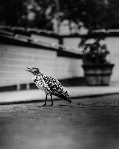Vogel in Nood