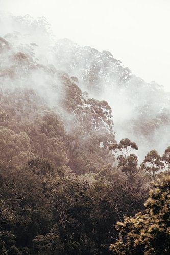 Mist tijdens de treinreis van Ella naar Kandy, Sri Lanka