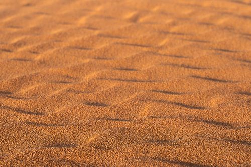 De schoonheid van de woestijn