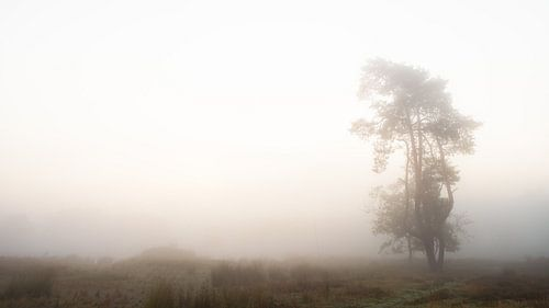 Eenzame boom. #2