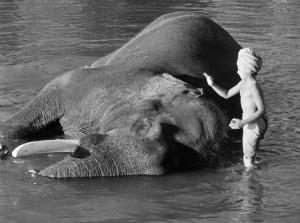 Niño elefante 1937