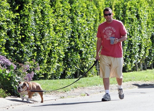 Celebrities Who Love to Walk Their Dogs