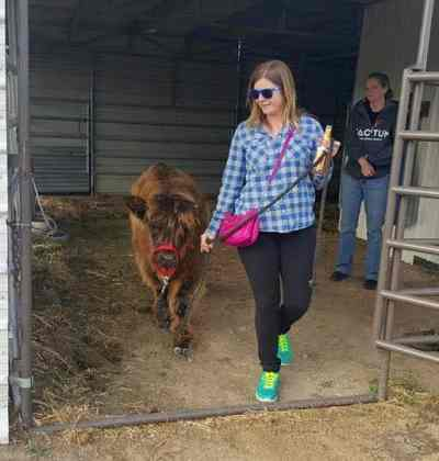 Emma training a steer at K9 Lifeline