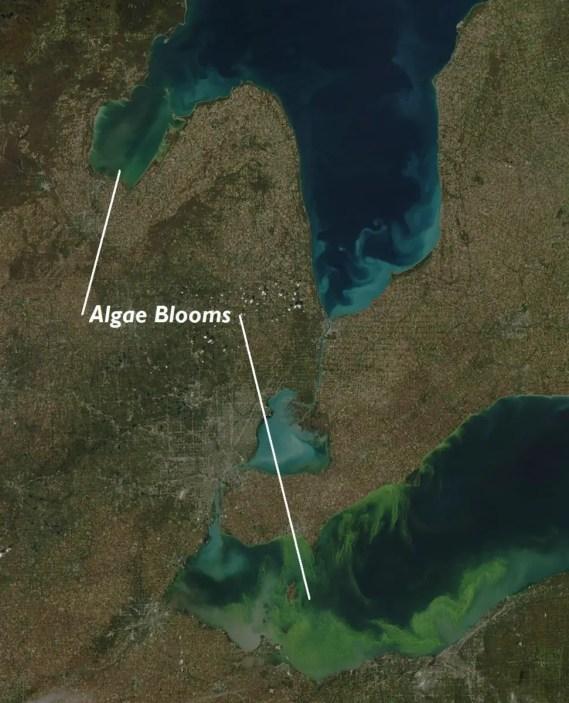 Saginaw Bay Algae Bloom - Great Lakes Algae