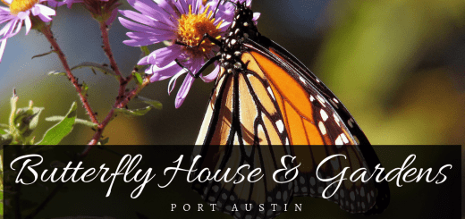 Port Austin Butterfly House