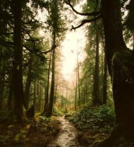 St. Joseph Trail