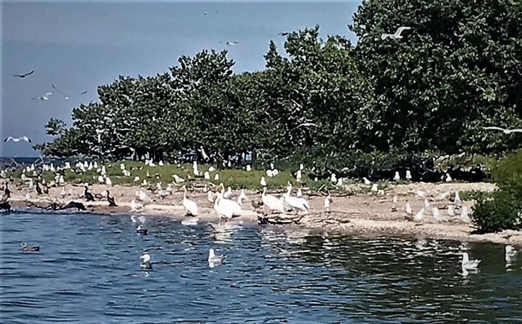 Charity Island is  Rookery