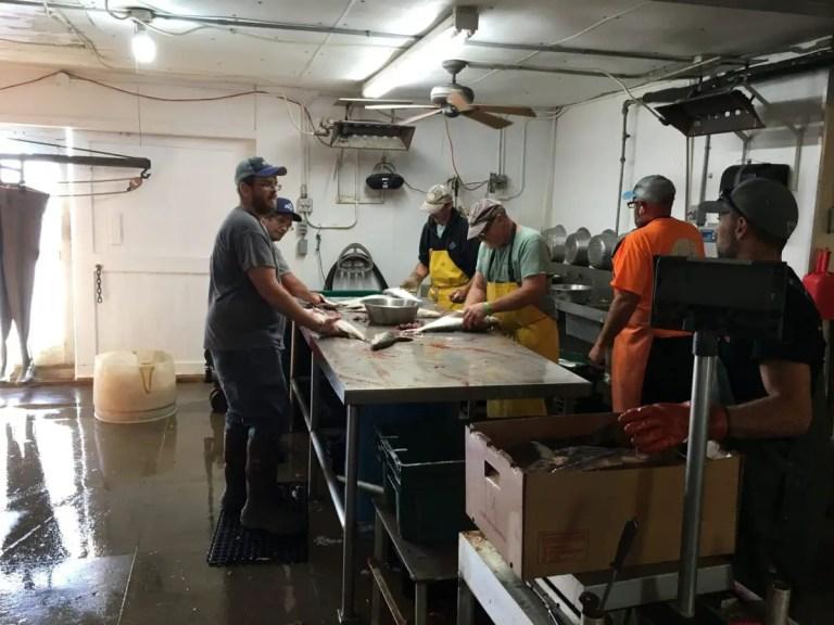Fish Processing at Bay Port Fish Company
