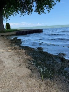 Lake Muck on Shore