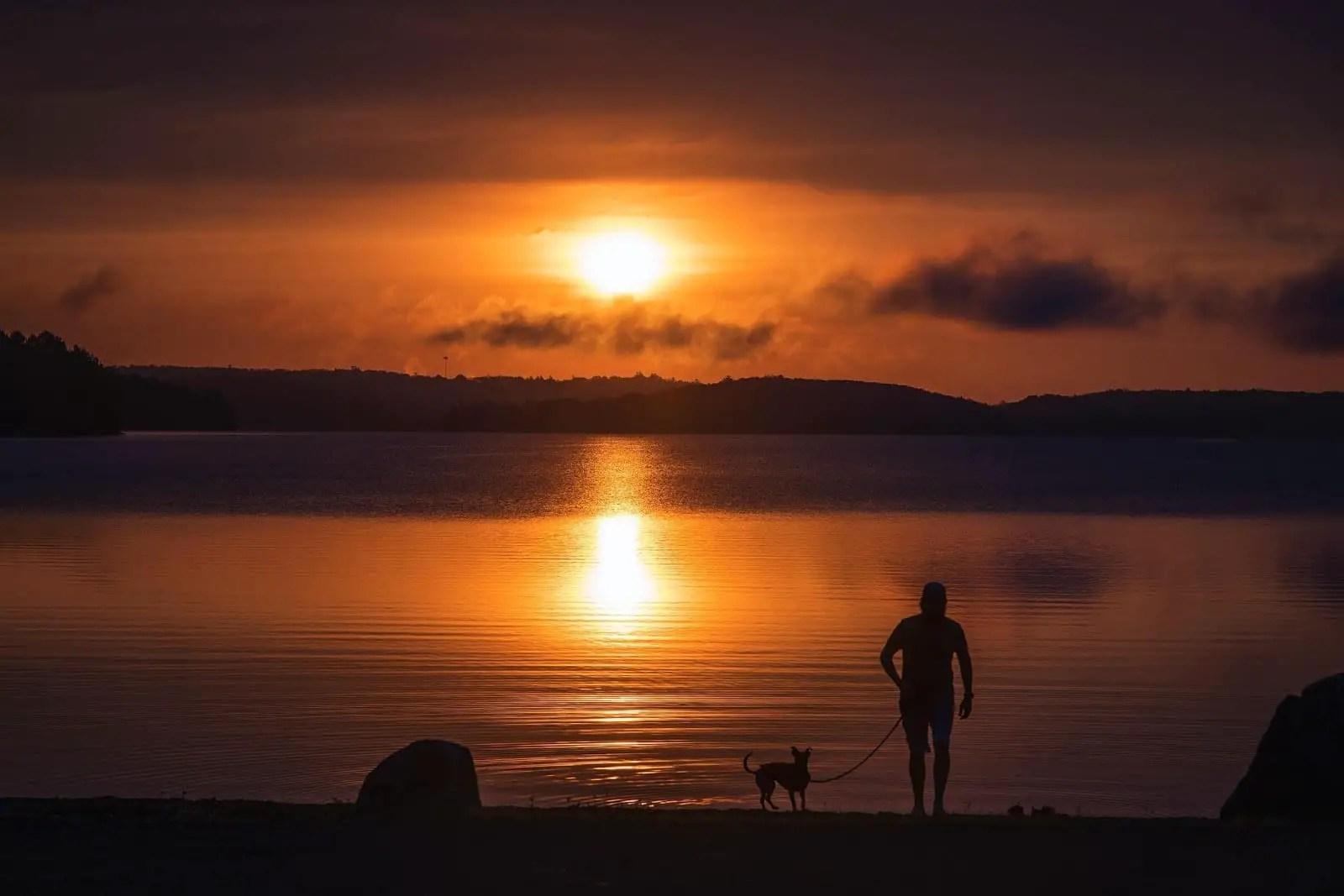 Dog at Lake at Sunset