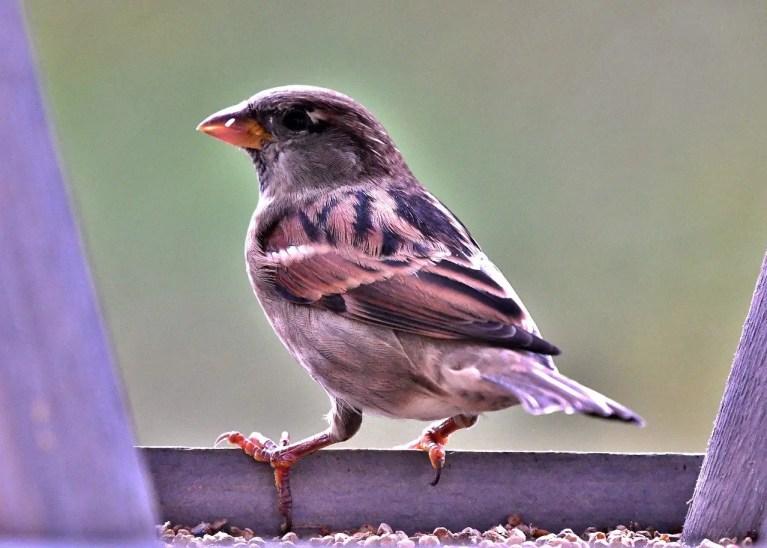 Michigan Bird Feeders
