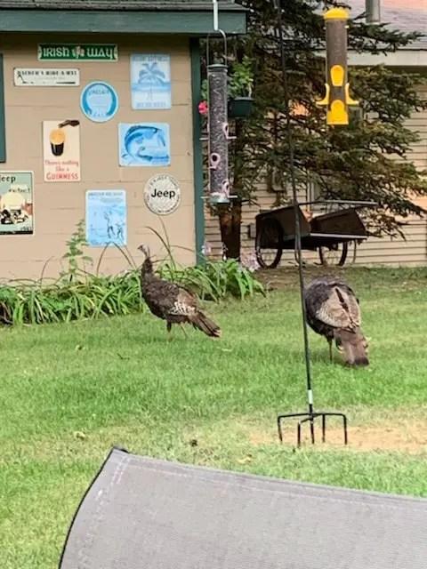 Hopper Bird Feeder w Turkeys