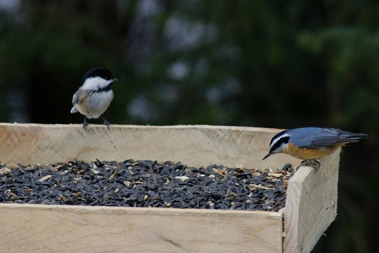 Simple Platform Bird Feeder - Michigan Bird Feeders