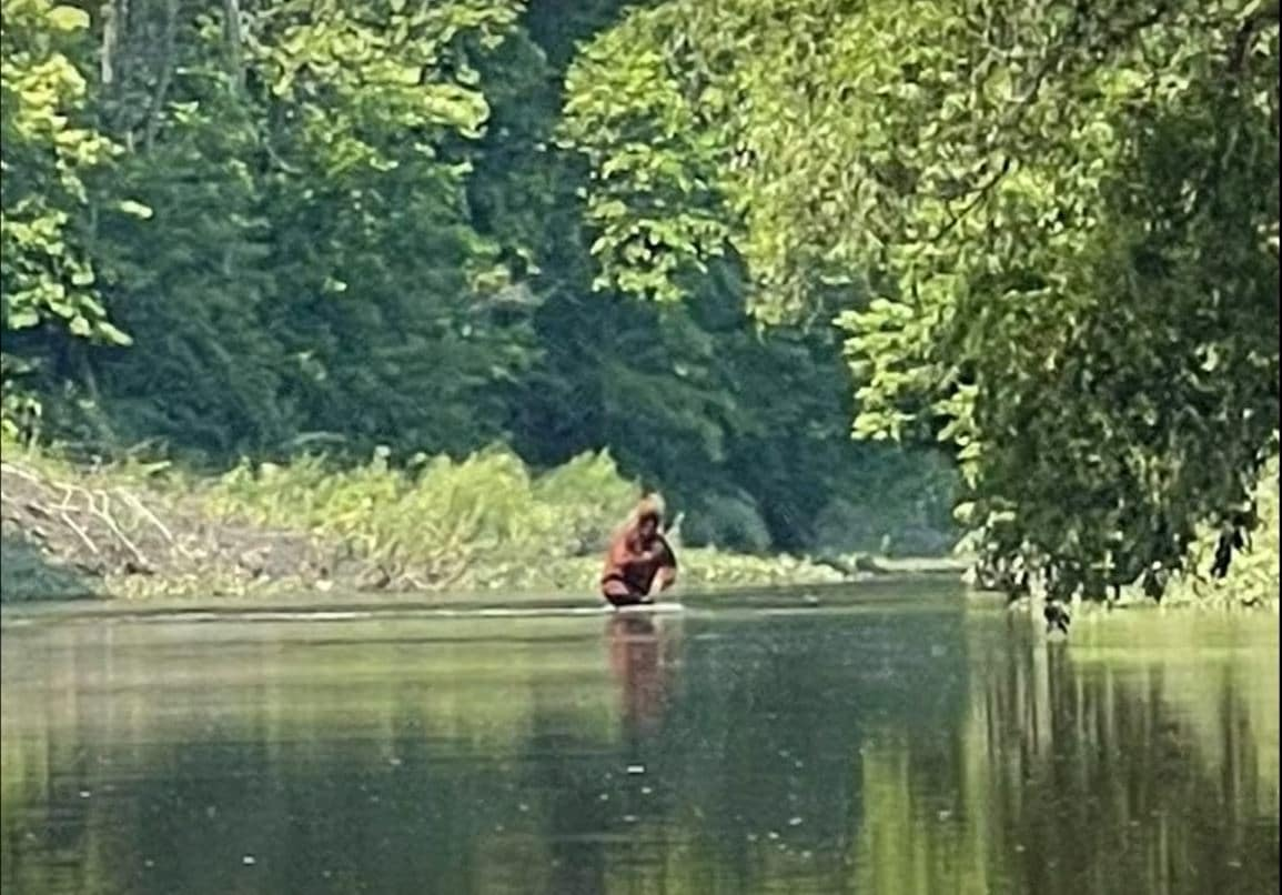 Bigfoot on the Cass River