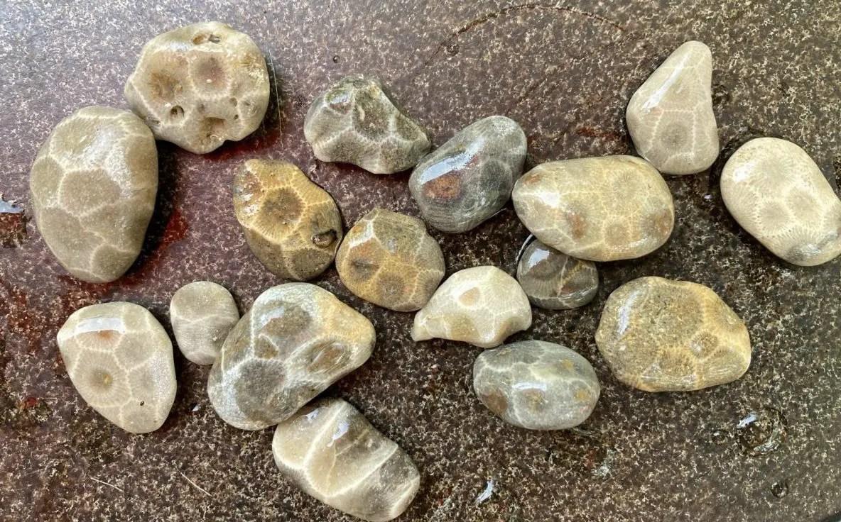 Saginaw Bay's Little Petoskey Stones
