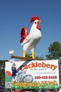The biggest Cock at Cabbage Patch