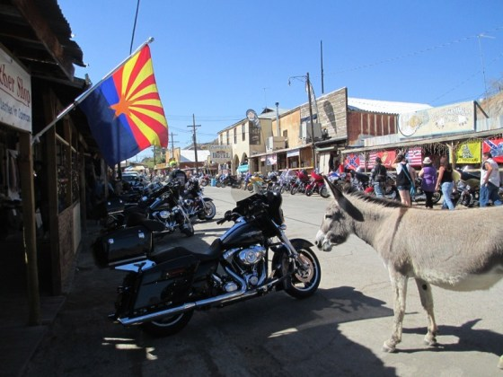 Resident asses roam the streets of Oatman, Arizona, where dodging donkey dung is a full-time job