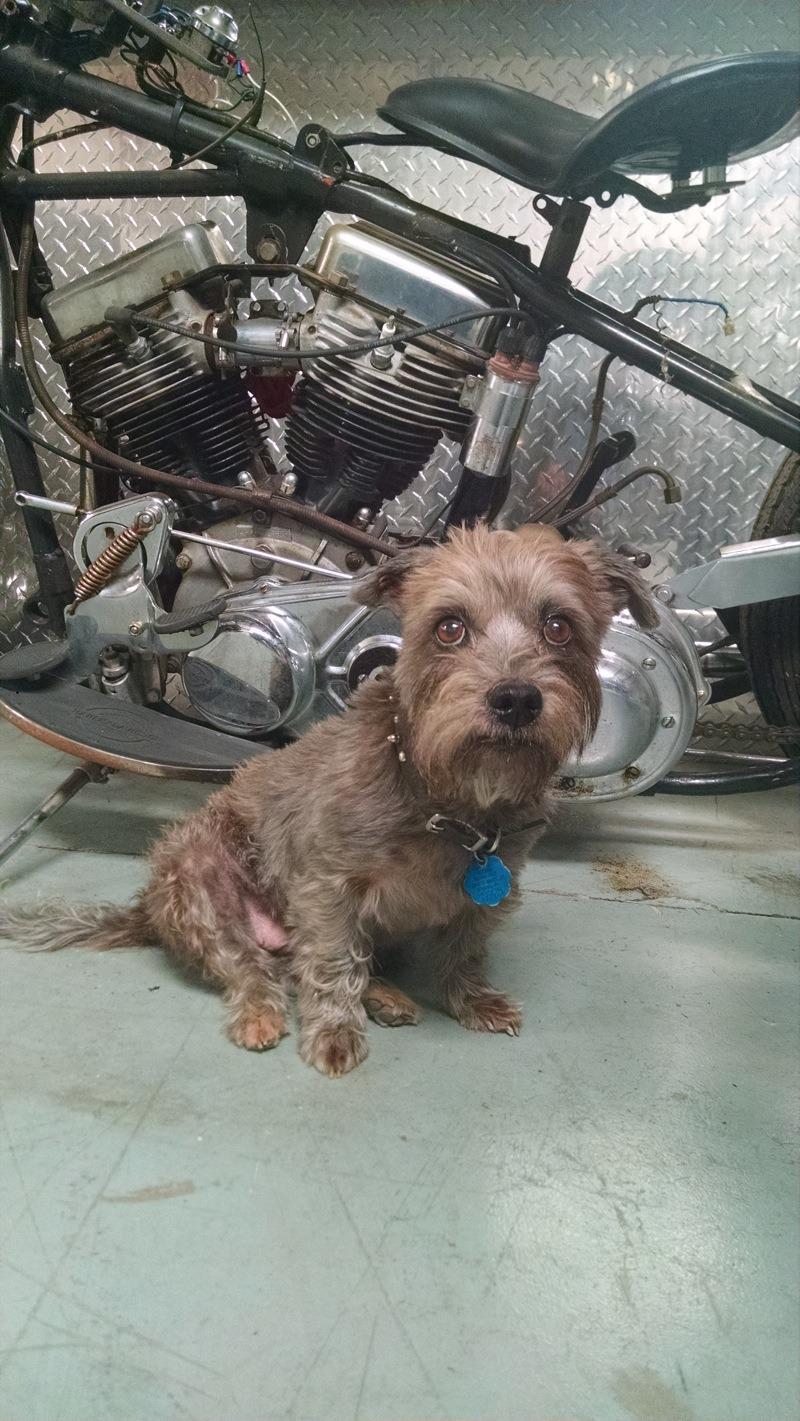 Shop Dogs: Molly, the shop dog and riding partner