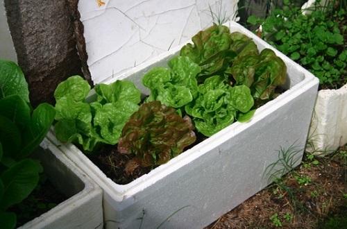 Thùng xốp trồng rau