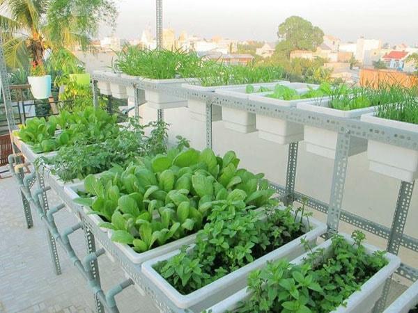 Như Phương chuyên cung cấp thùng xốp trồng rau sạch