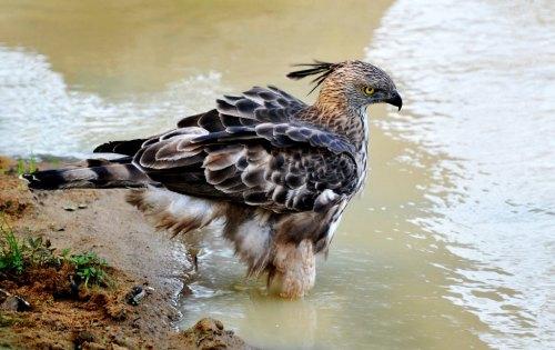 Marcel bird 33