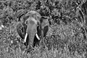 Marcel elephant 101