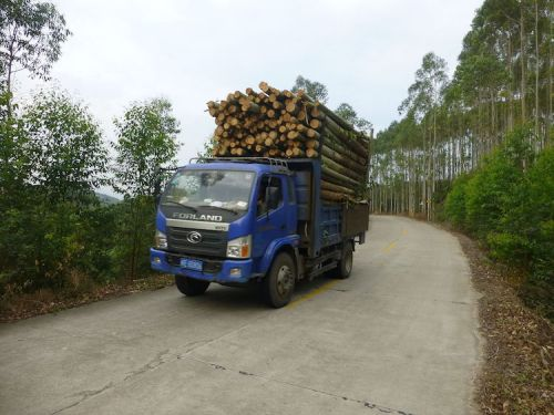 timber-transport-timber-transported-from-a-woodlot-in-the-hills-of-zhangpu-county-fujian-wikimedia-commons