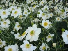 Wild Flowers - m