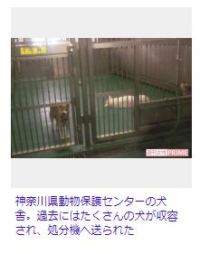 【犬猫の殺処分】現状全国で年間5万匹以上!獣医師がやりきれない心情を吐露を告白