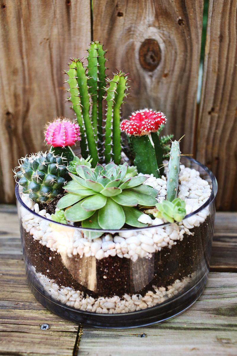 arranjo em vidro plantas suculentas coloridas