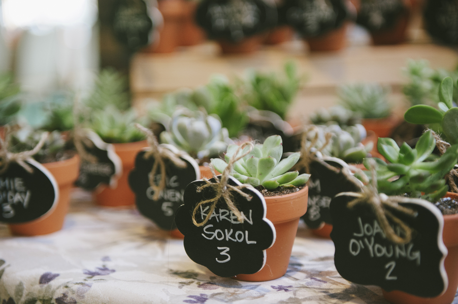 vasinhos lembranças plantas suculentas