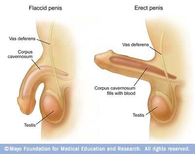 circumcised nudist dick igfap