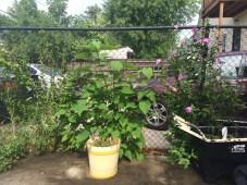 13609 Durkee Avenue - backyard