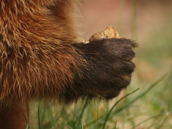 Furry hand